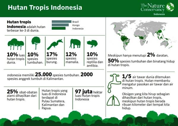 Infografis Informasional