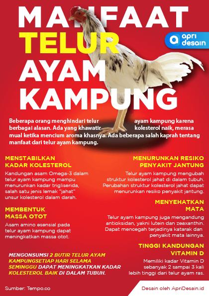 Infografis Manfaat Ayam Kampung